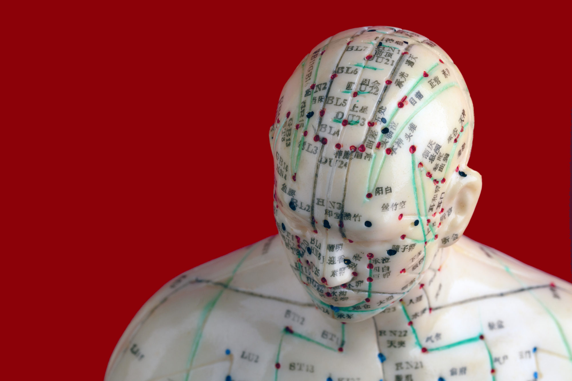 acupuncture model head
